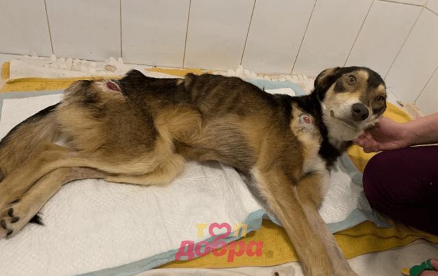 собаке сделали сложную операцию
