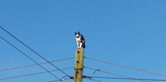 кот на электростолбе