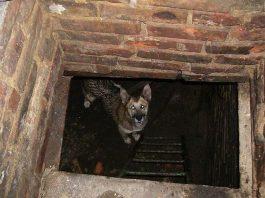 собака в погребе