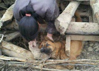 Плачущая собака под развалинами дома